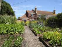 veg patch in july