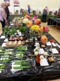 Westfield Horticultural Society